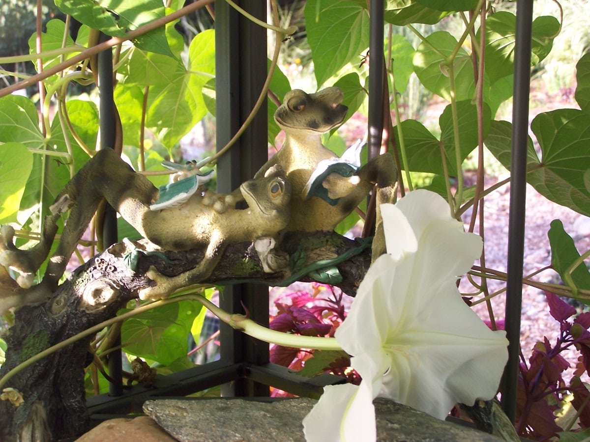frogs-relaxing-next-to-moonflower